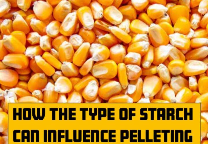 How the type of starch can influence pelleting
