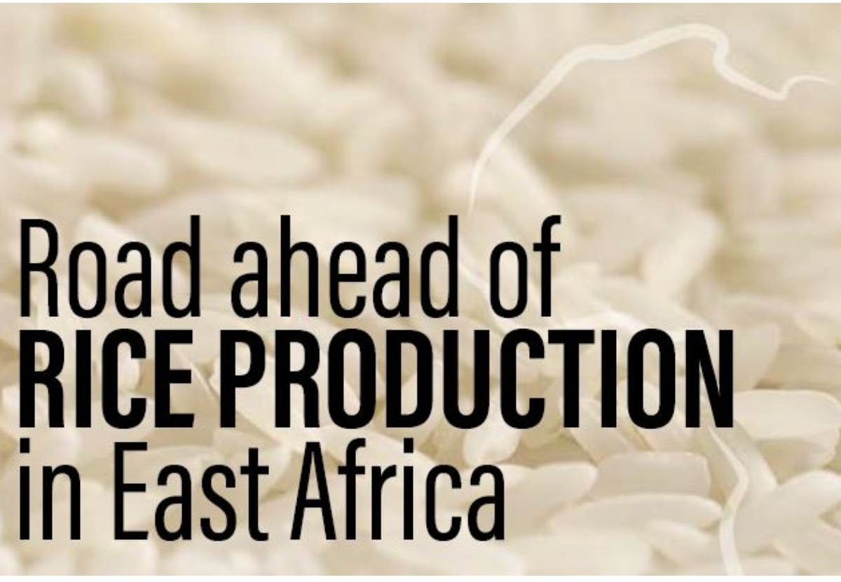 Road ahead of  RICE PRODUCTION  in East Africa