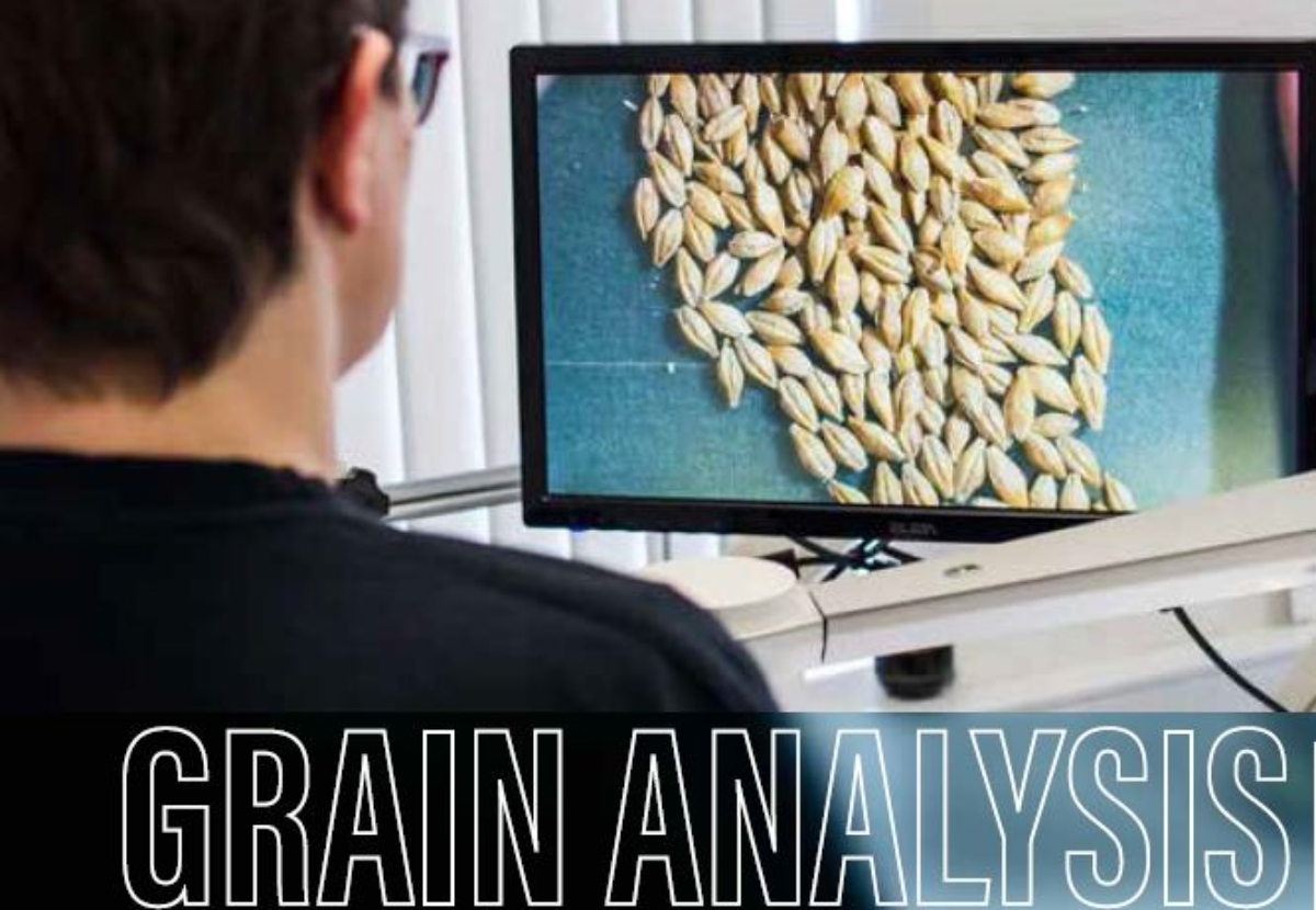 Grain Analysis