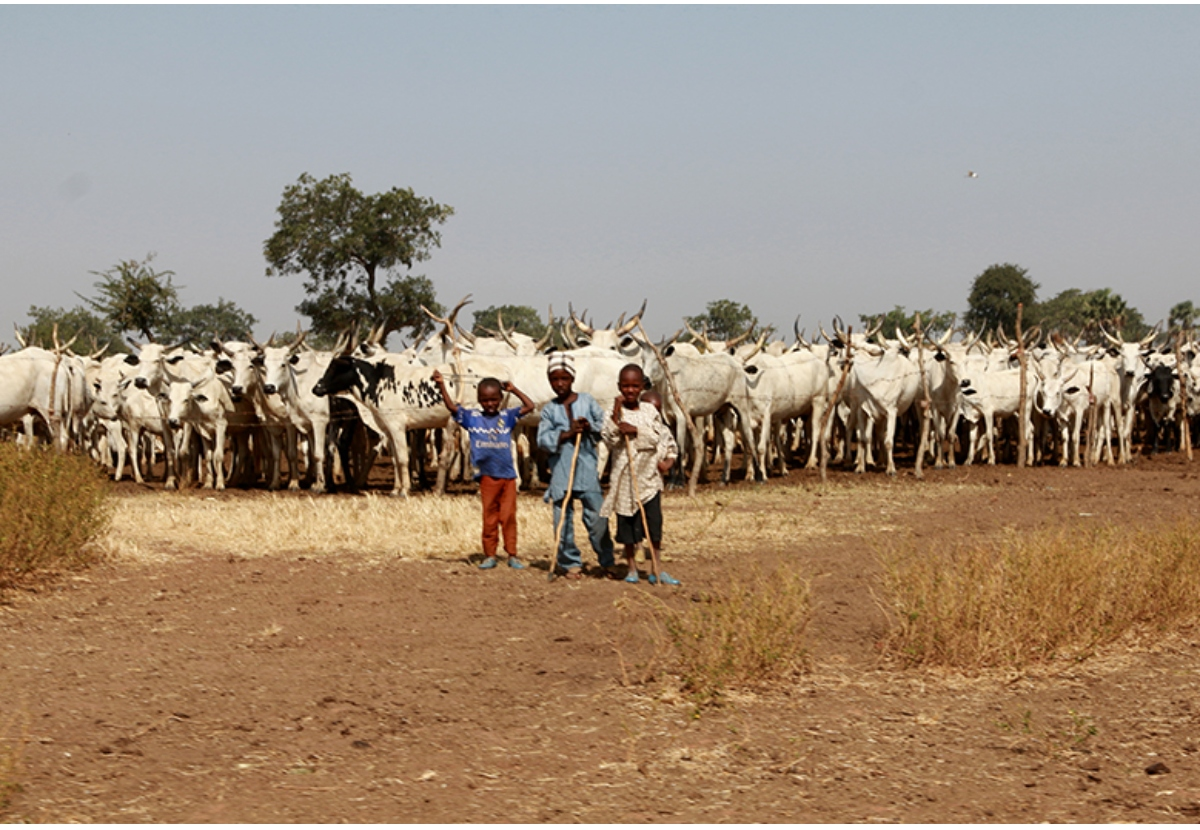 Bright Prospects For Nigeria's Animal Feed Market