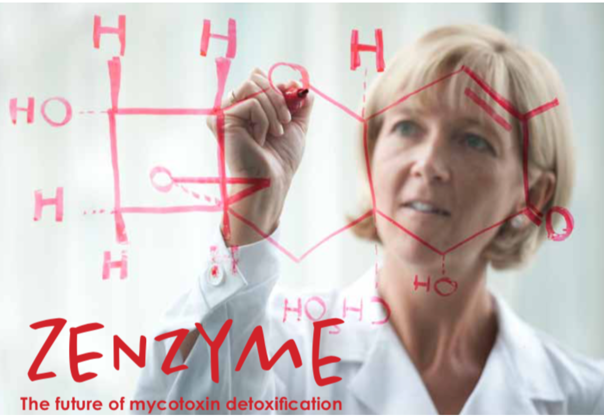 ZENzyme: The future of mycotoxin detoxification