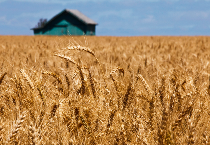 New term wheat prices from Turkish Grain Board
