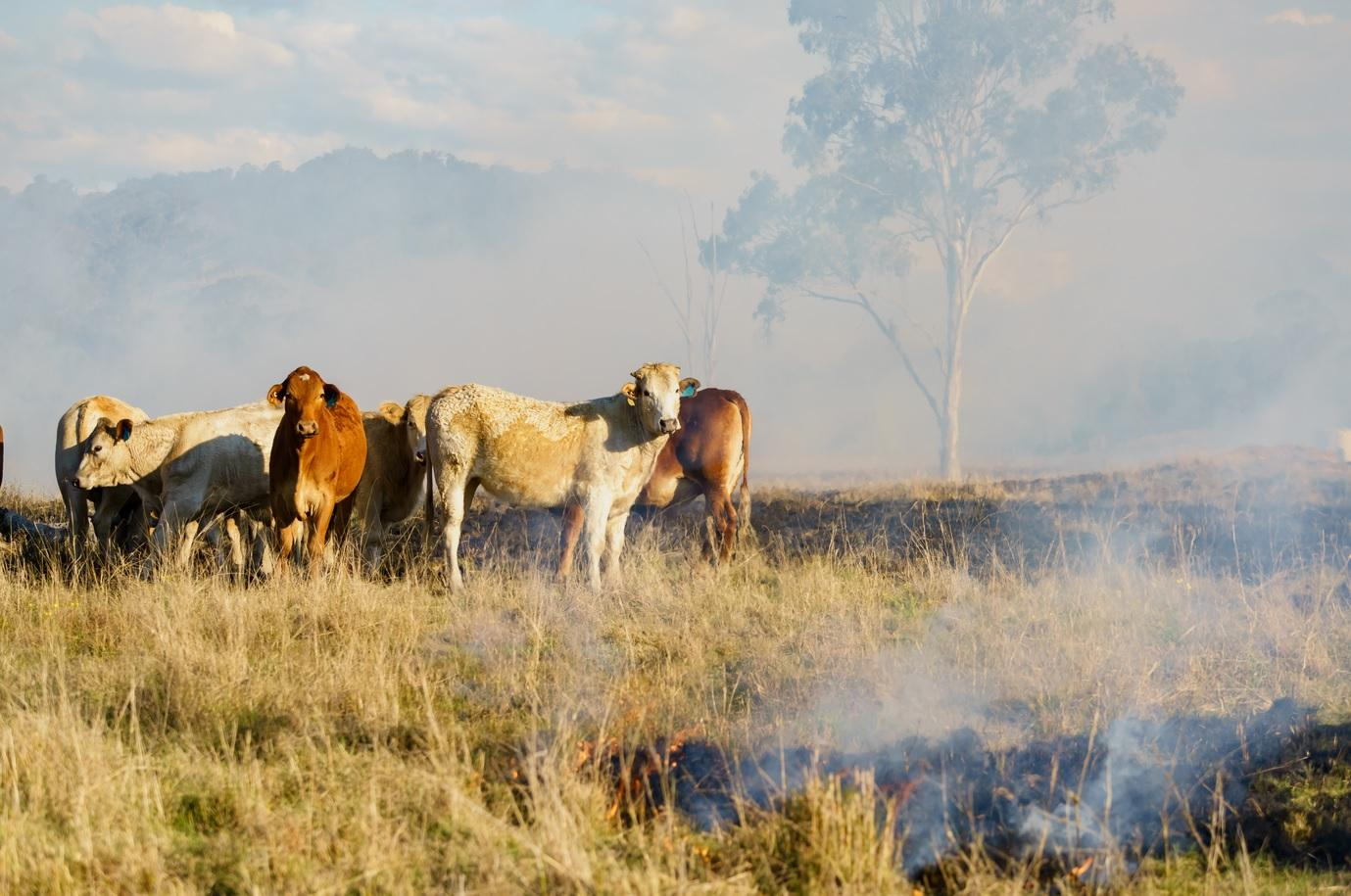 Alltech launches relief effort for Australian farmers