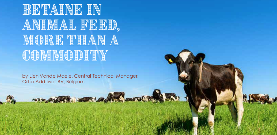Betaine in animal feed, more than a commodity