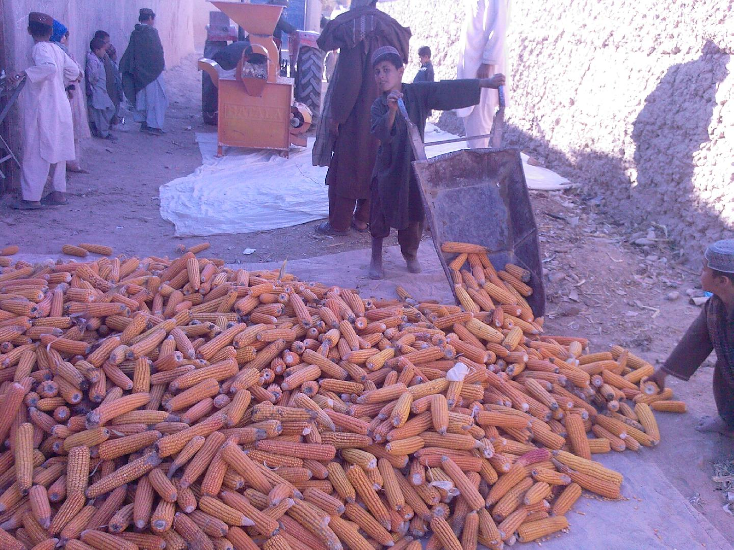 Improving the understanding of agricultural cycles and practices in Afghanistan